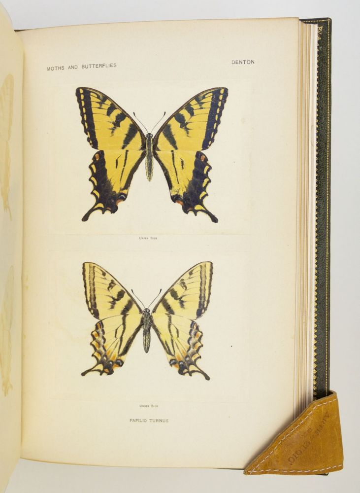 AS NATURE SHOWS THEM, MOTHS AND BUTTERFLIES OF THE UNITED STATES EAST OF THE ROCKY MOUNTAINS. COLOR PLATE BOOKS, SHERMAN FOOTE DENTON, LEPIDOPTERA.