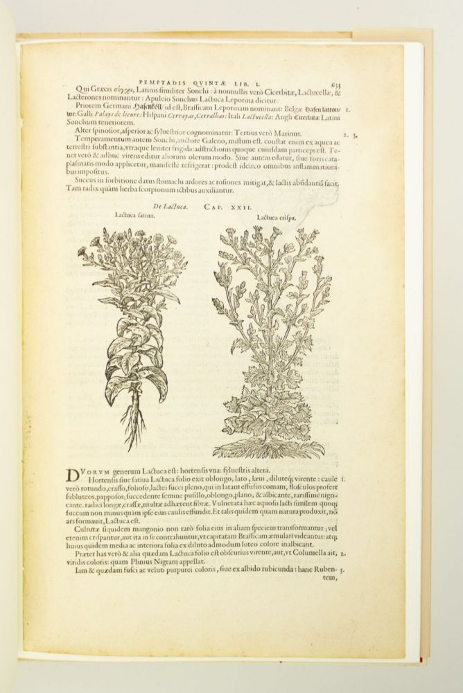 A LEAF FROM THE 1583 REMBERT DODOENS HERBAL PRINTED BY CHRISTOPHER PLANTIN, WITH A SHORT ESSAY BY CAREY S. BLISS. LEAF BOOK, CAREY S. BLISS, REMBERT DODOENS.