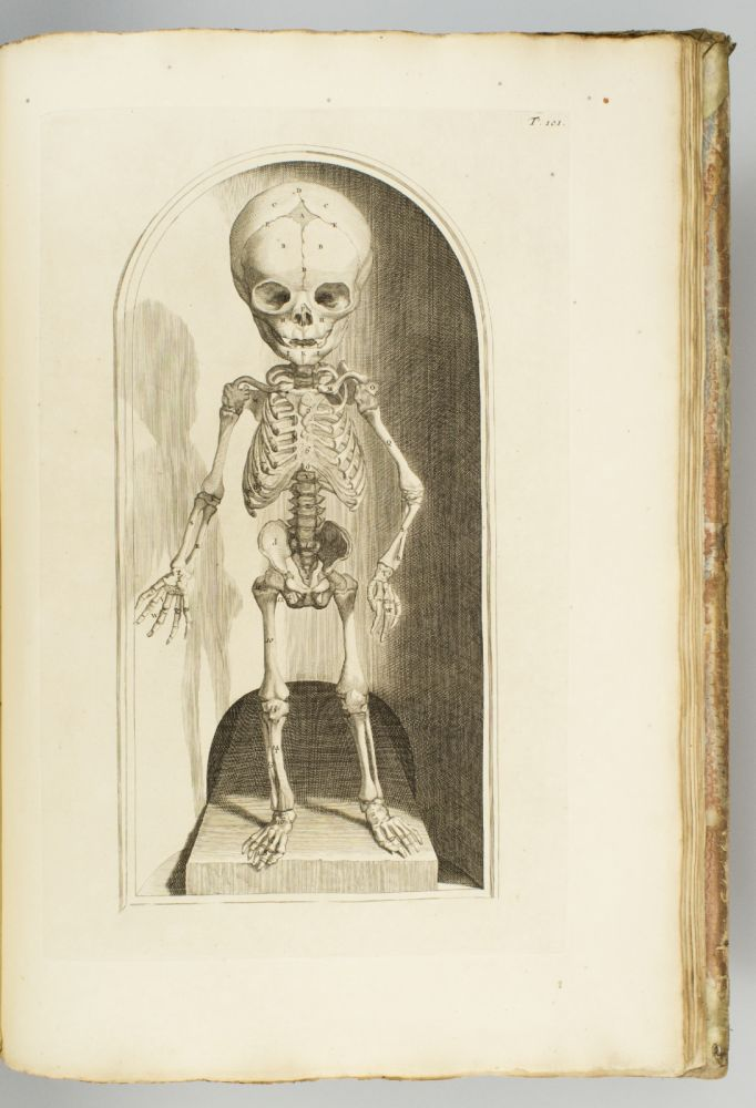 ANATOMIA CORPORUM HUMANORUM. WILLIAM COWPER.