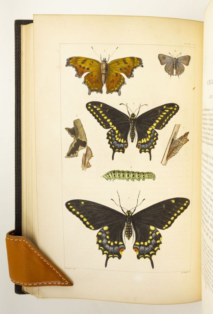 A TREATISE ON SOME OF THE INSECTS INJURIOUS TO VEGETATION. ENTOMOLOGY, THADDEUS WILLIAM HARRIS.
