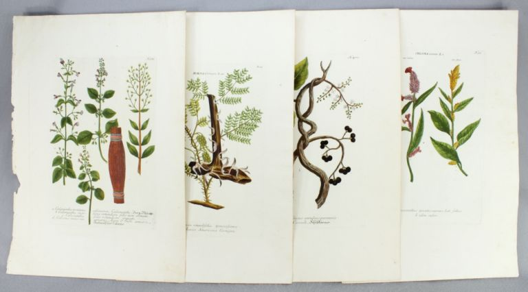 "A COLLECTION OF 27 BOTANICAL PLATES, OFFERED IN TWO GROUPS, FROM ""PHYTANTHOZA ICONOGRAPHIE."" BOTANICAL ENGRAVINGS, JOHANN W. WEINMANN."