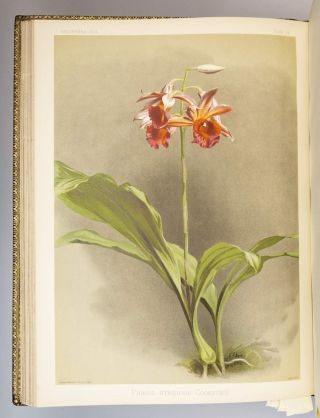 REICHENBACHIA. ORCHIDS ILLUSTRATED AND DESCRIBED.