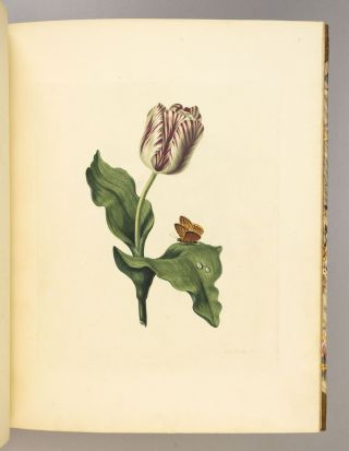 STUDIES OF FRUIT AND FLOWERS, PAINTED FROM NATURE. [bound with] THE ELEMENTS OF FLOWER AND FRUIT PAINTING; ILLUSTRATED WITH ENGRAVINGS.