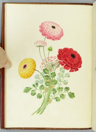 GROUPS OF FLOWERS, DRAWN AND ACCURATELY COLOURED AFTER NATURE, WITH FULL INSTRUCTIONS FOR THE YOUNG ARTIST.