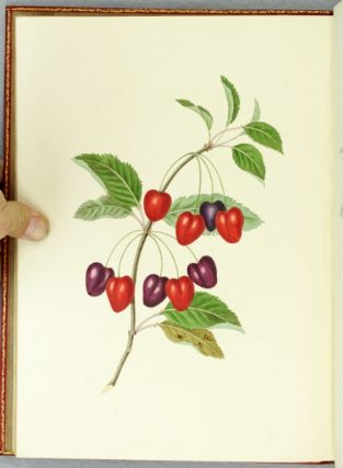 GROUPS OF FLOWERS [GROUPS OF FRUIT . . . SIX BIRDS] DRAWN AND ACCURATELY COLOURED AFTER NATURE, WITH FULL INSTRUCTIONS FOR THE YOUNG ARTIST.
