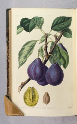 POMOLOGIA BRITANNICA; OR, FIGURES AND DESCRIPTIONS OF THE MOST IMPORTANT VARIETIES OF FRUIT CULTIVATED IN GREAT BRITAIN.