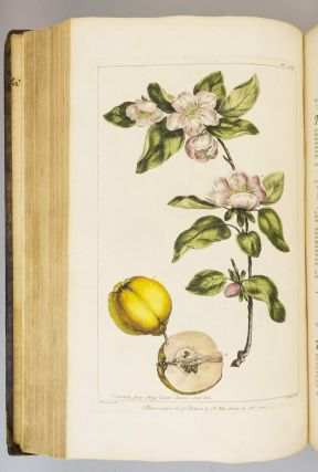 FIGURES OF THE MOST BEAUTIFUL, USEFUL, AND UNCOMMON PLANTS DESCRIBED IN THE GARDENER'S DICTIONARY.