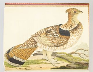 AMERICAN ORNITHOLOGY; OR, THE NATURAL HISTORY OF THE BIRDS OF THE UNITED STATES.
