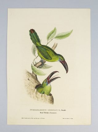 MONOGRAPHIE DER RAMPHASTIDEN ODER TUKANARTIGEN VOEGEL. [MONOGRAPH OF THE RAMPHASTIDAE, OR FAMILY OF TOUCANS].