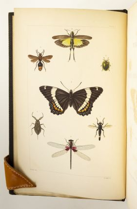 A TREATISE ON SOME OF THE INSECTS INJURIOUS TO VEGETATION.