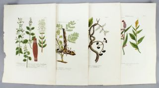 "A COLLECTION OF 27 BOTANICAL PLATES, OFFERED IN TWO GROUPS, FROM ""PHYTANTHOZA ICONOGRAPHIE.""..."