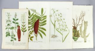 "A COLLECTION OF 27 BOTANICAL PLATES, OFFERED IN TWO GROUPS, FROM ""PHYTANTHOZA ICONOGRAPHIE."""