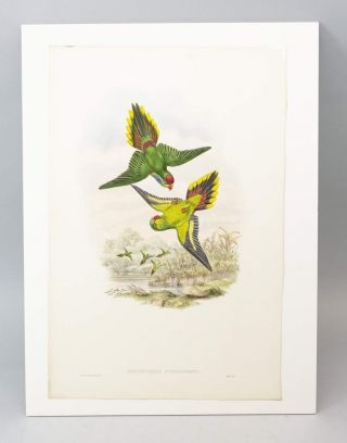 "FROM ""A MONOGRAPH OF THE TROCHILIDAE, OR FAMILY OF HUMMINGBIRDS"" AND ""BIRDS OF NEW GUINEA."""