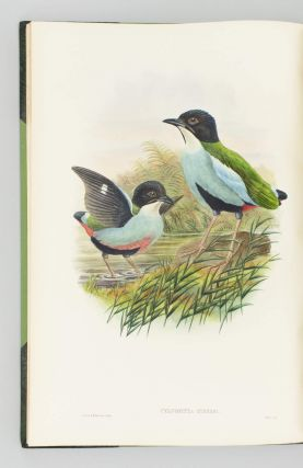 MONOGRAPH OF THE PITTIDAE. ORNITHOLOGY, JOHN GOULD, COLOR PLATE BOOKS